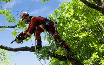 find trusted rated Becontree tree surgeons in Barking Dagenham