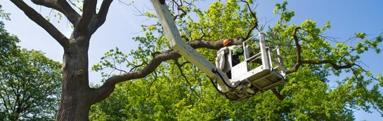 Becontree tree surgery services