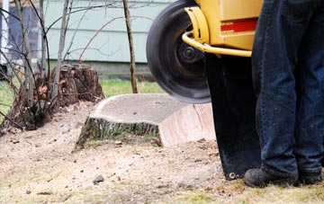 rated Becontree tree stump removal companies