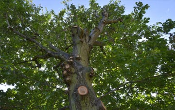 what is Becontree tree surgery?