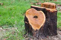 free Becontree tree stump removal quotes